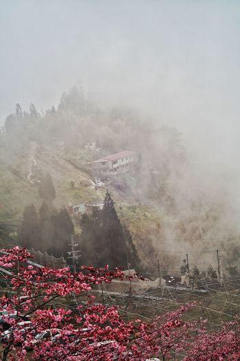 臺灣 恩愛農場 Taiwan Weather Rain Fog Sky No People Nature Rainy Season Outdoors RainDrop Close-up Cold Temperature Day
