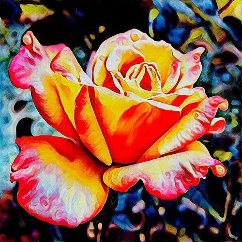 Eyem Photography On Steroids Taking Photos To Another Level Beauty In Nature A Rose With A Twist Close-up Colorado Springs CO USA Creativity Enjoying Life Thru Art Vibrant Color Eyem Art