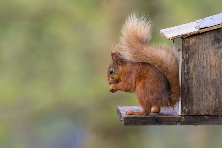 Squirrel outdoors