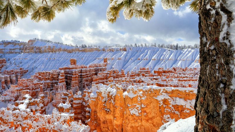 2016 Beauty In Nature Bryce Canyon Day Nature No People Outdoors Sky Tree Utah EyeEmNewHere