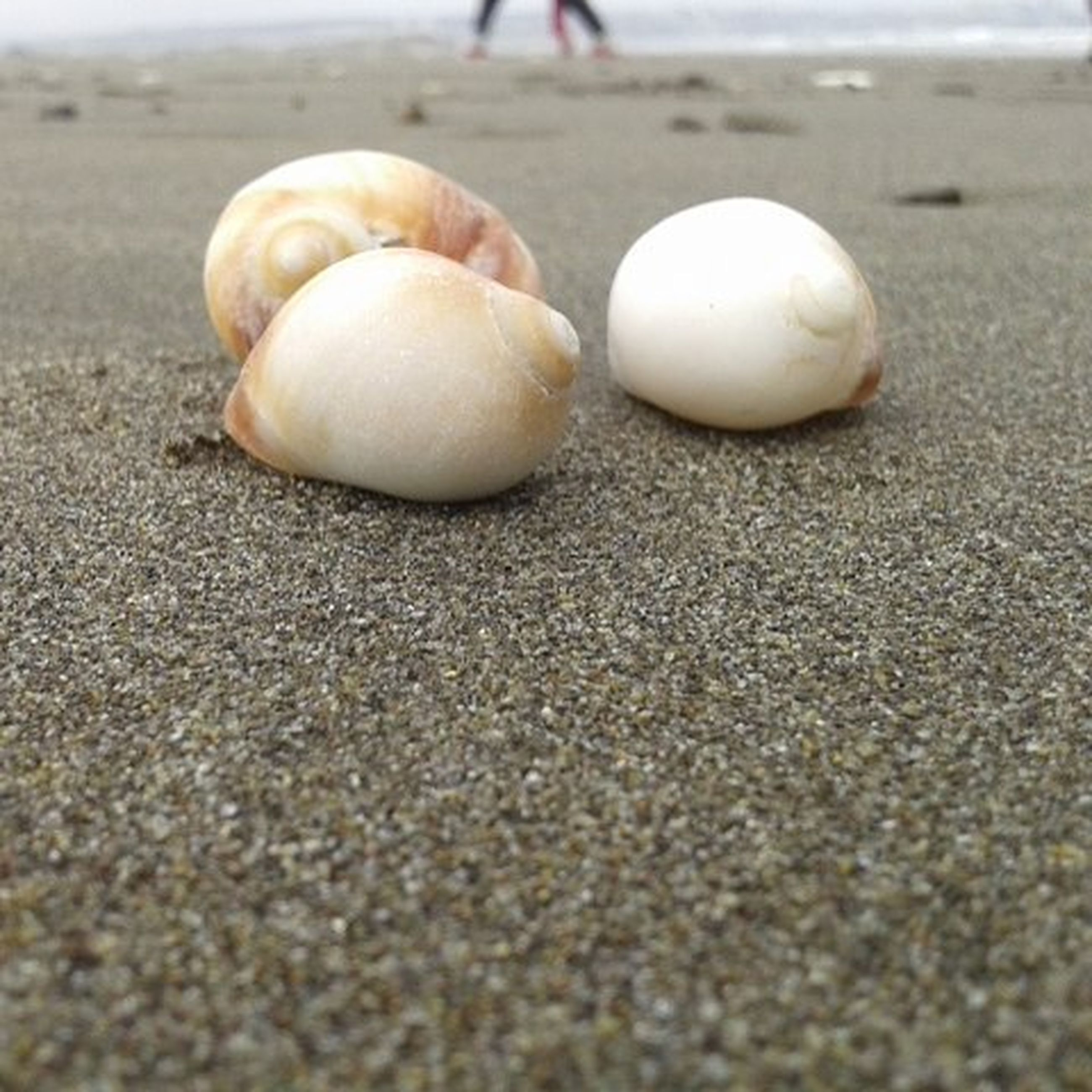 sand, beach, close-up, selective focus, surface level, seashell, animal shell, focus on foreground, day, shell, outdoors, still life, no people, pebble, textured, nature, sphere, sunlight, shore, street