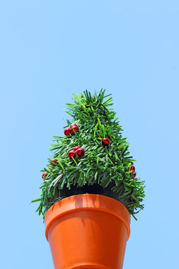 Mini Christmas tree in plastic pot. Beauty In Nature Blue Christmas Clear Sky Day Flower Flower Pot Fragility Freshness Green Color Growth Nature No People Outdoors Plant Potted Plant Red Single Tree Tree Window Box