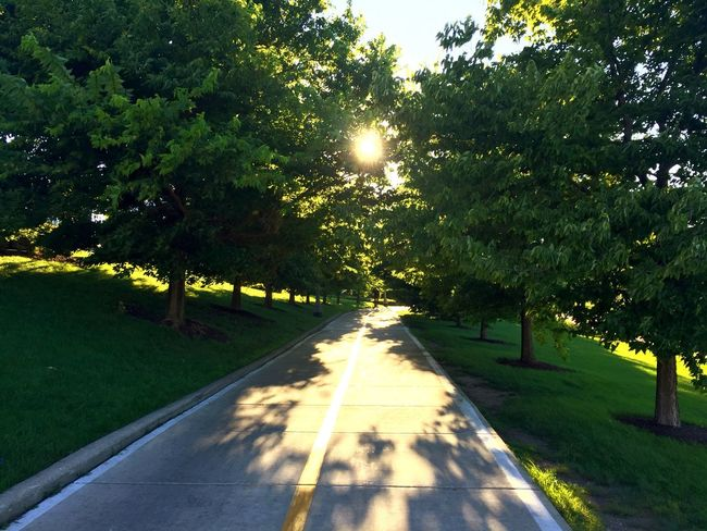 Sheddaquarium Cycling Park Sunglare Tree The Way Forward Road Beauty In Nature Sunlight