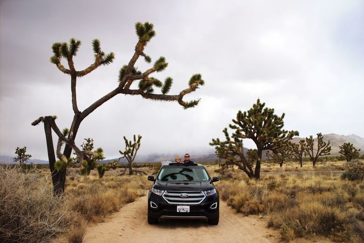 Road trip, Mojave Natural Preserve Joshua Tree, CA Joshua Tree Joshua Tree National Park Car Adventure Transportation Nature Sky 4x4 Off-road Vehicle Day Landscape Scenics Tree Outdoors Beauty In Nature Summer Road Tripping The Traveler - 2018 EyeEm Awards