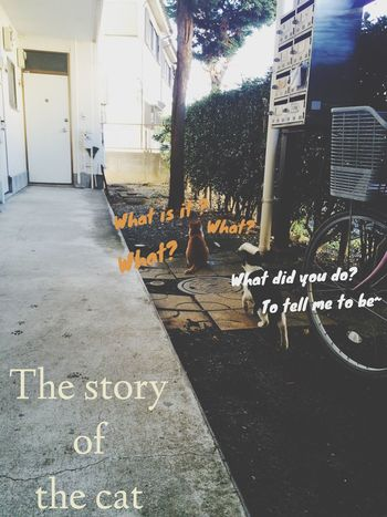 The story of the cat?? Hello World