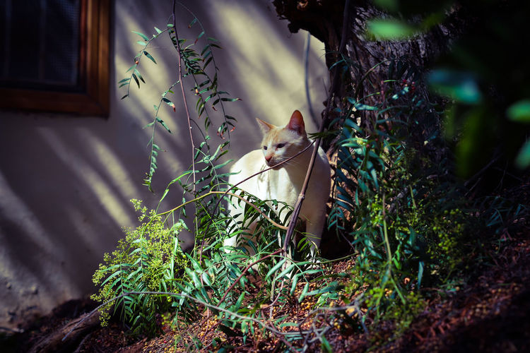 Garden Cat Cat