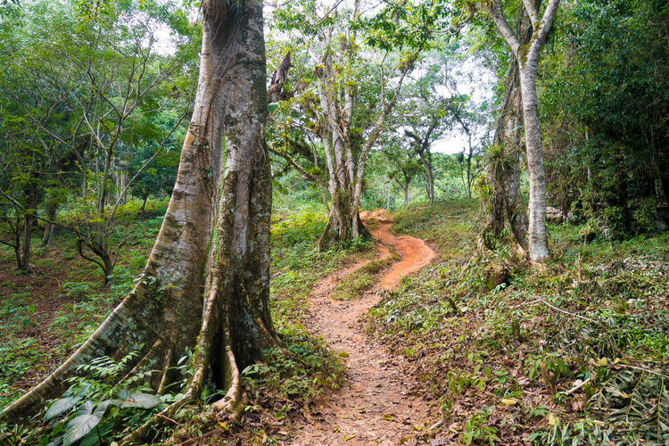 Hiking Nature Path Topes De Collantes Tree Forest Hiking Trail Hikingadventures Jungle Rain Forest