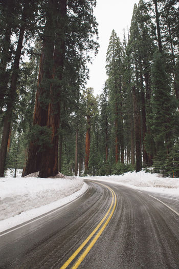 Asphalt Day Forest Landscape Mountain Nature Nature No People Outdoors Road Road Roadtrip Scenics Sequoia Sequoia National Park Snow Snowing The Way Forward Tranquil Scene Tranquility Transportation Tree Tree Trees Winter