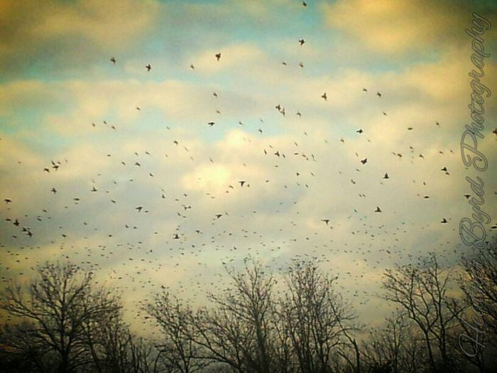 Bird Dance Black Bird Ritual