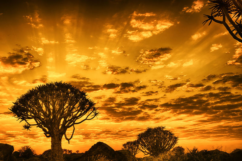 Clouds Dramatic Sky EyeEm Landscape Gold Colored HDR HDR Collection Hdrphotography Landscape Landscape_Collection Landscape_photography Namibia Quivertree  Sunrise Sunrise And Clouds Sunrise_Collection