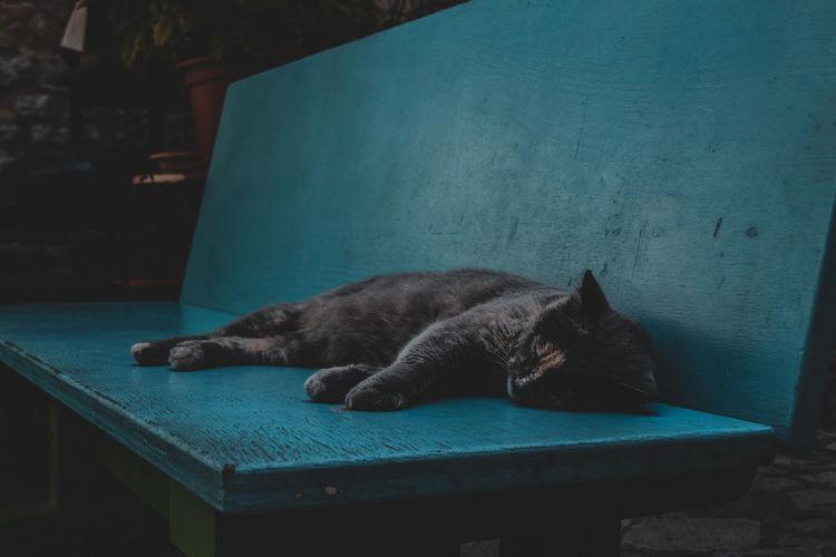 Sleepy cat on a
