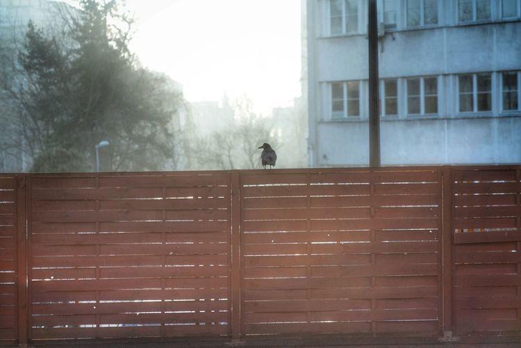 View of bird perching on building window
