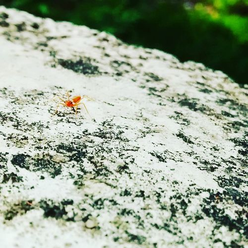 Ants never ceases to amaze me.. A tiny world within our WORLD.