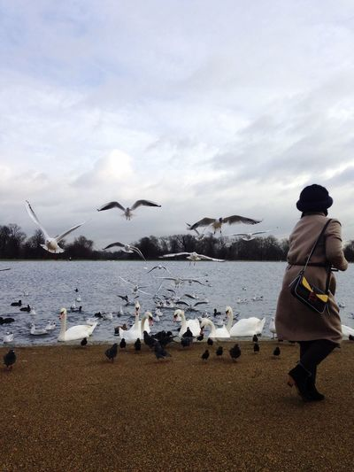 Feed us or we will get you! 🙄😁🏃🏼🐦🐦🐦 Birds Angrybirds Park Kensington Gardens London Feeding The Birds Pond Wildlife Winter February Runningaway Woman