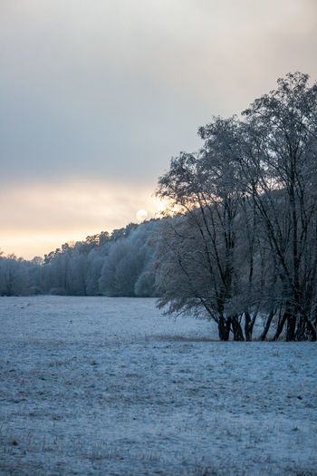 Snow covered land and trees against sky during sunset