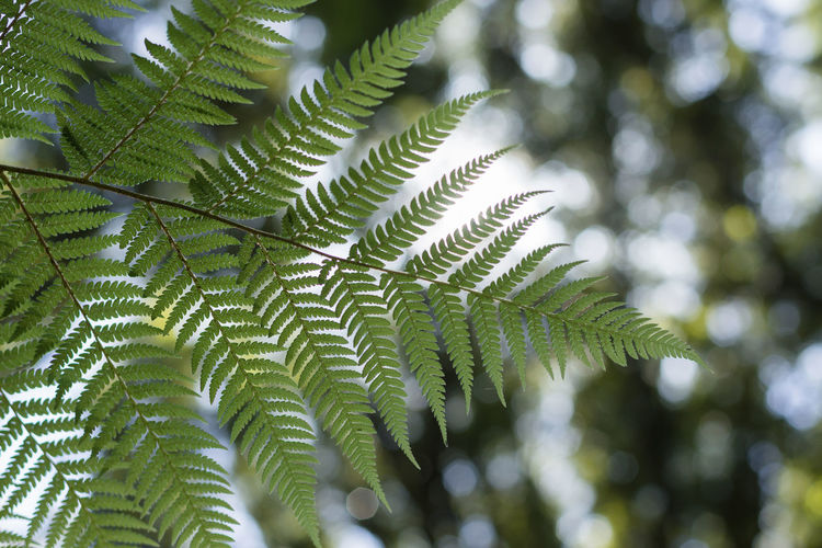 Low angle view of fern leaves on tree
