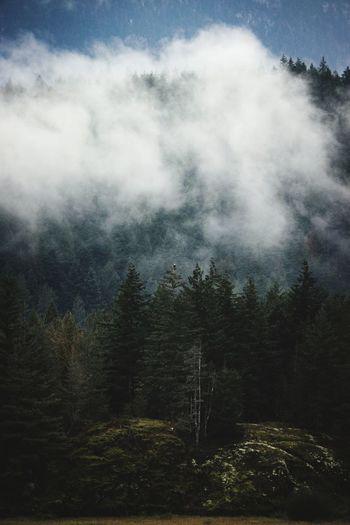 Bold eagle and fog PNW Naturephotography Cascadiaexplored Mothernature Bold Eagle Eagle Animals In The Wild Animal Themes Tree Sky Foggy Fog Mist Atmospheric Mood Woods Weather Rainy Season