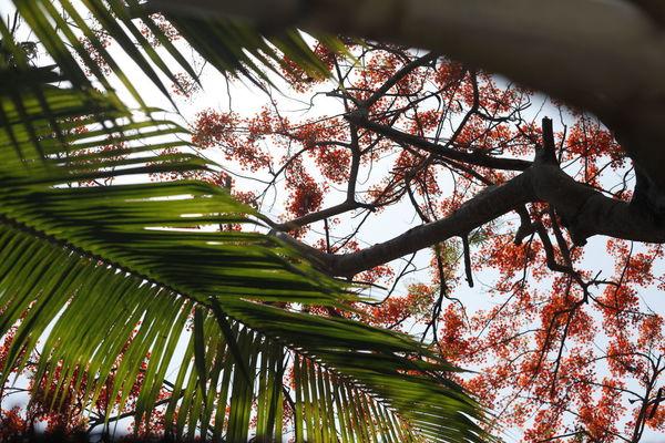 Mexico Nature Walt Whitman Wanderer Color Sky