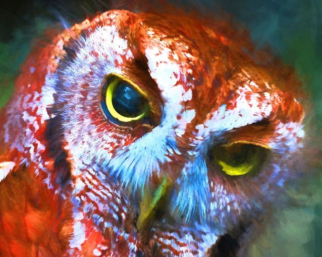 dbJR promise, 30% of the profits goes directly to charity. DbJR Animal Eye Animal Head  Animal Themes Animals In The Wild Close-up EyeEm Best Shots EyeEm Nature Lover EyeEmNewHere Looking At Camera Nature No People One Animal Outdoors Portrait UnderSea Wildlife Owl Art Owl OWLEYE Live For The Story The Portraitist - 2017 EyeEm Awards