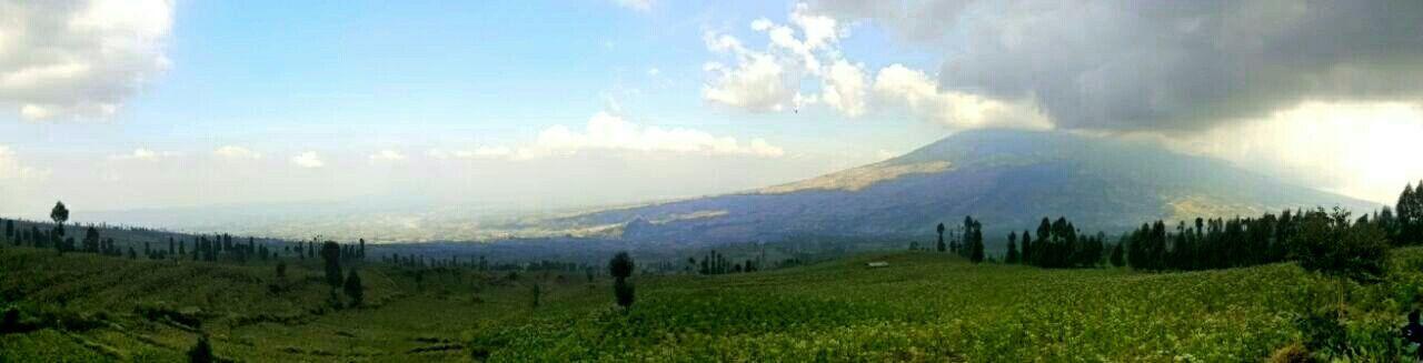 Posong Posong INDONESIA Beautiful Nature Mountain Temanggung Tobaccoflower Tobacco Panoramic Photography