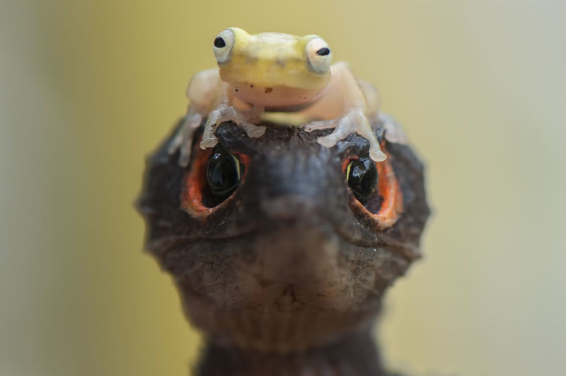Close-up of skink and frog
