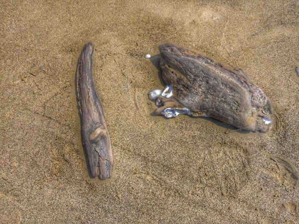 Treibgut Sea Life Beach Sand Seafood Fish Close-up
