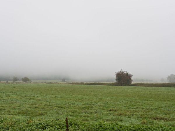 Landscape Foggy Nature Grass Landscape_Collection Outdoors