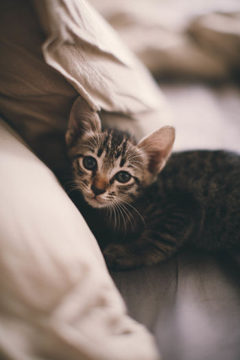 Close-up portrait of kitten lying on bed