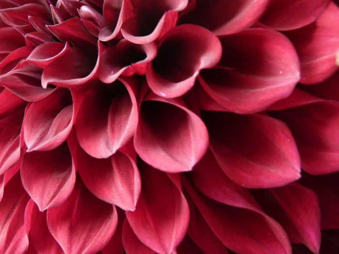 Nature always produce best patterns.. here is one close up shot of Dahlia flower... Macro Photography Pattern Flowrers Red Nopeople