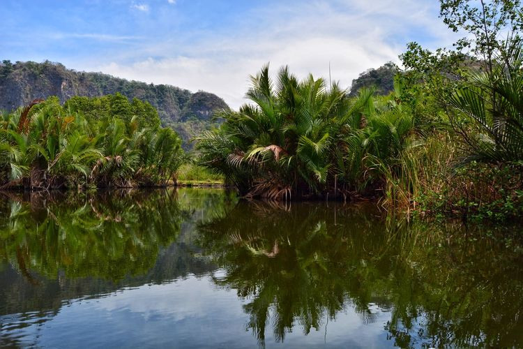 reflection Reflection Reflections In The Water River Landscape Tree Water Irrigation Equipment Lake Reflection Sky Tropical Tree