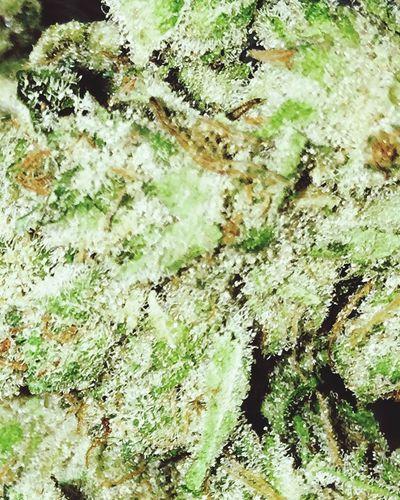 Legal Marijuana Nature Growth Green Oregon St Helens Weed Beauty In Nature Pacific Northwest  Leisure Activity Miss Burns Maximum Closeness