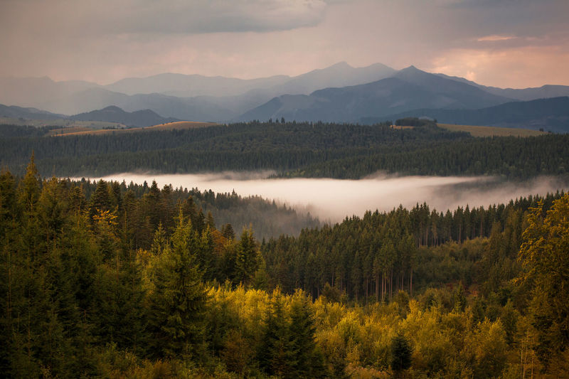 Foggy landscape after rain in Bucovina, Romania. Beautiful Cloudy High Nature Scenic Top Travel View Beauty Beauty In Nature Clouds Fog Foggy Forest Landscape Mountain Outdoor Pick Pine Tree Scenics Sky Stone Sunset Valley