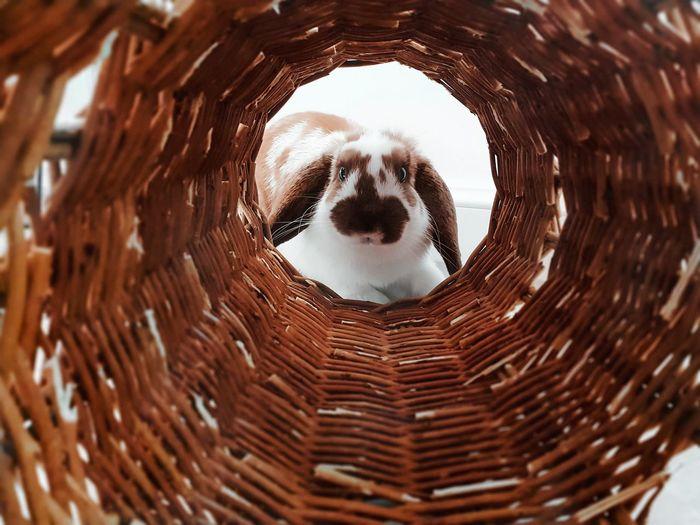 Rabbit seen through wicker basket