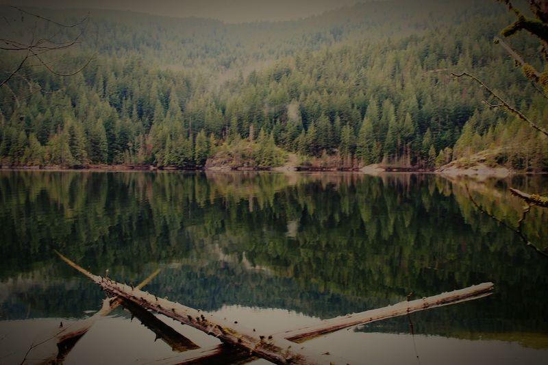 🙅 British Columbia Lake Buntzen Lake Forest Forest Photography Lakeside Lake View