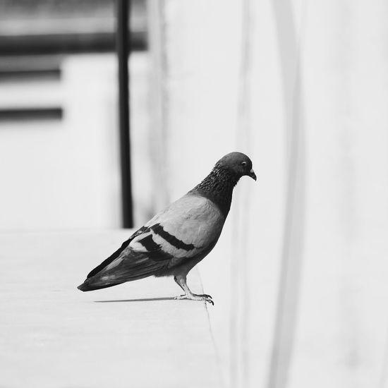 Up Close Street Photography