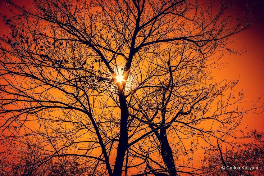 Poente no Cerrado Sunset Nature Tree Sun Beauty In Nature Orange Color Sunlight Silhouette Sky No People Tranquility Day Céu Fotografia Brasília - Brazil Fotoartistica Fotoart Photography Foto Photo Fotoartegram Brasília Fotoarte Brasília Minha♥ Fotografia Photo Gavião