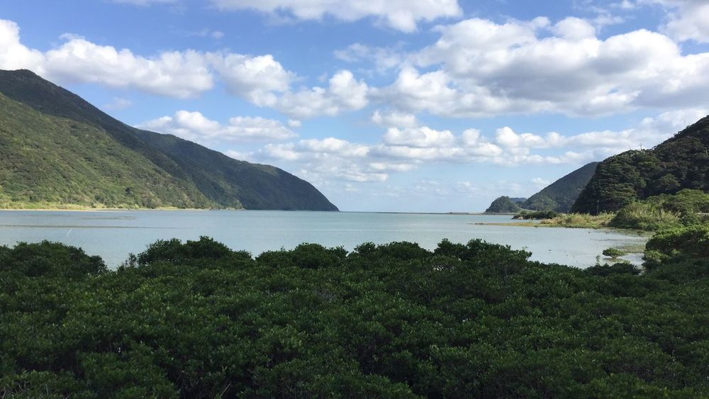 Cultures Sky Landscape Mountain Idyllic Scenics Tranquil Scene Outdoors Tree Cloud - Sky Nature No People Beach Day Mangrove Forest Mangrove in Amami Island Kagoshima Japan