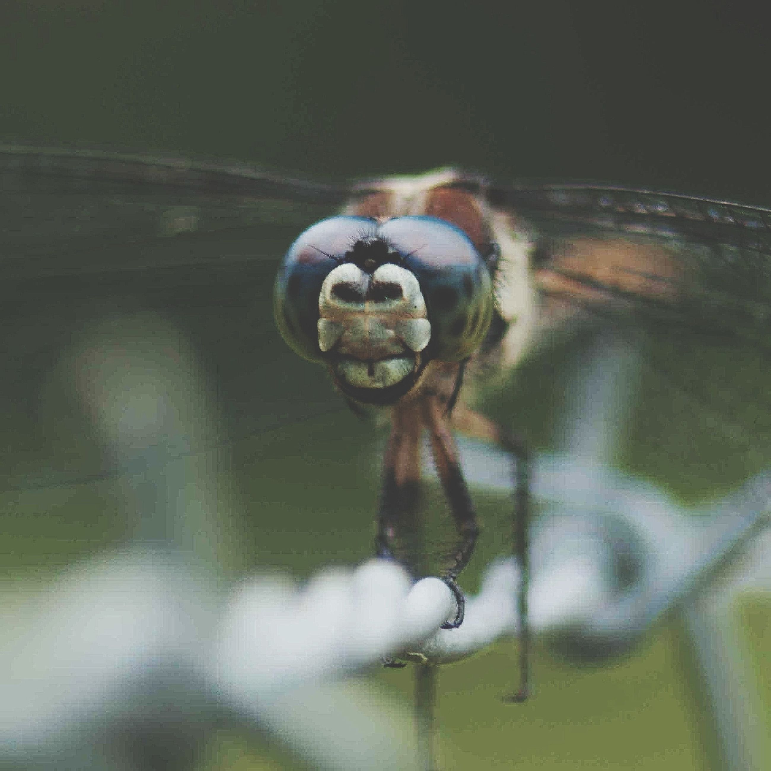 one animal, animal themes, water, animals in the wild, wildlife, close-up, reflection, insect, focus on foreground, selective focus, wet, drop, no people, day, outdoors, nature, motion, transparent, glass - material