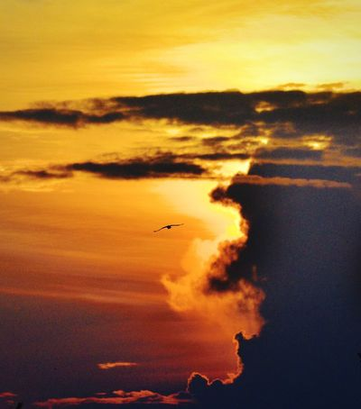 A bird in the beautiful sky Sunset Sky Cloud - Sky Scenics - Nature Orange Color Beauty In Nature Tranquil Scene Nature No People Flying Outdoors