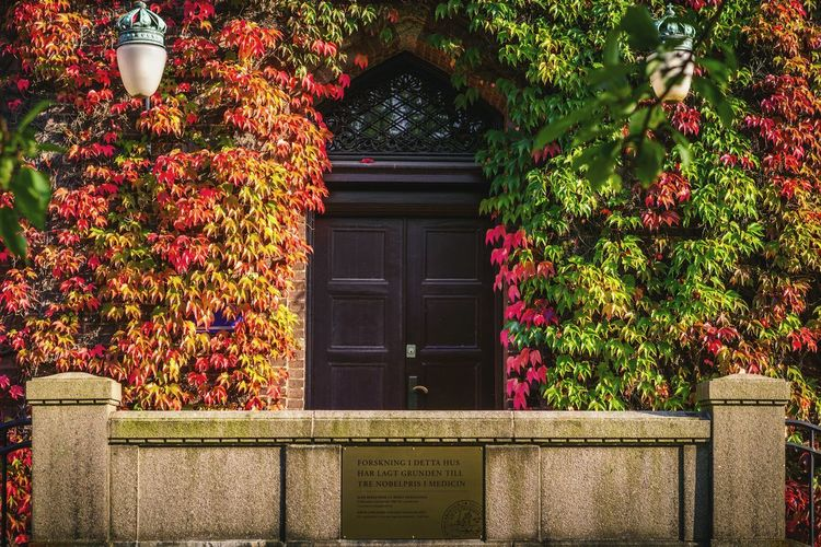 On the plaque: Research in this building has established the foundation for three nobel prizes in medicine (two in 1982 & one in 2000) Architecture Window Built Structure Building Exterior Beauty In Nature EyeEm Nature Lover Lund EyeEm Lund EyeEm Gallery Lund University Lunds Universitet Brick Wall Streetphotography Eyeem Autumn Colours EyeEm Street Photography Autumn🍁🍁🍁 Autumn 2016 EyeEmBestPics Eyeem Architecture Cityscape Autumn Colors Autumn Leaves Autumn Collection Nobel Prize The Week On Eyem