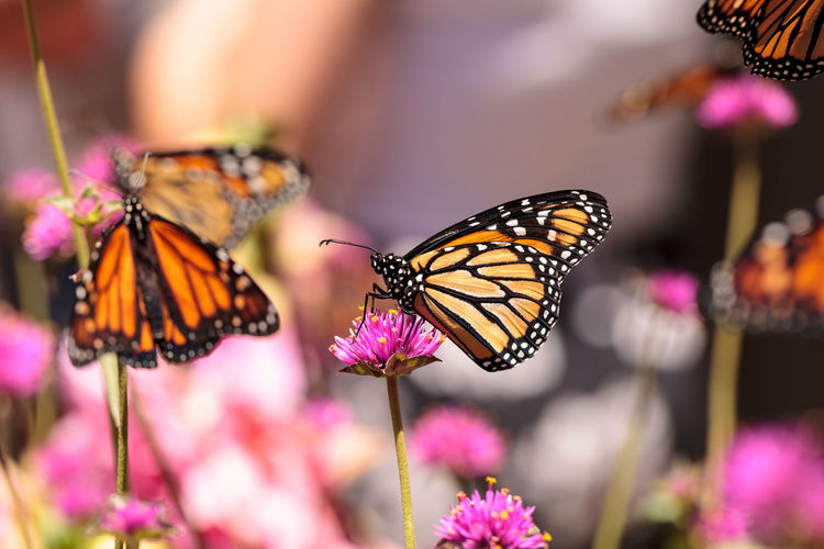 Butterflies perching on flower