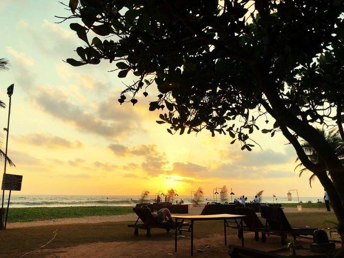 Ein Ort zum träumen Entspannung Chilling Sri Lanka Water Sky Sea Beach Tree Nature Seat Outdoors EyeEmNewHere