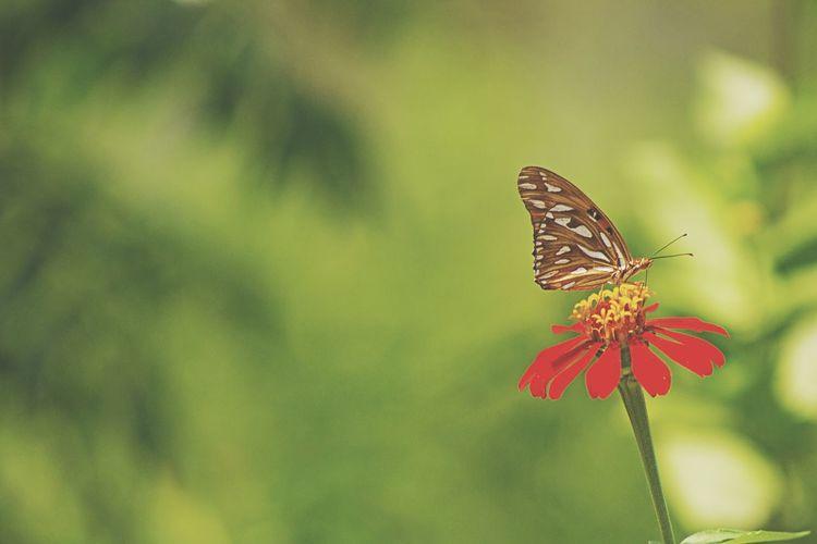 What I Value la flora de mi pais, una de la mas importante del mundo