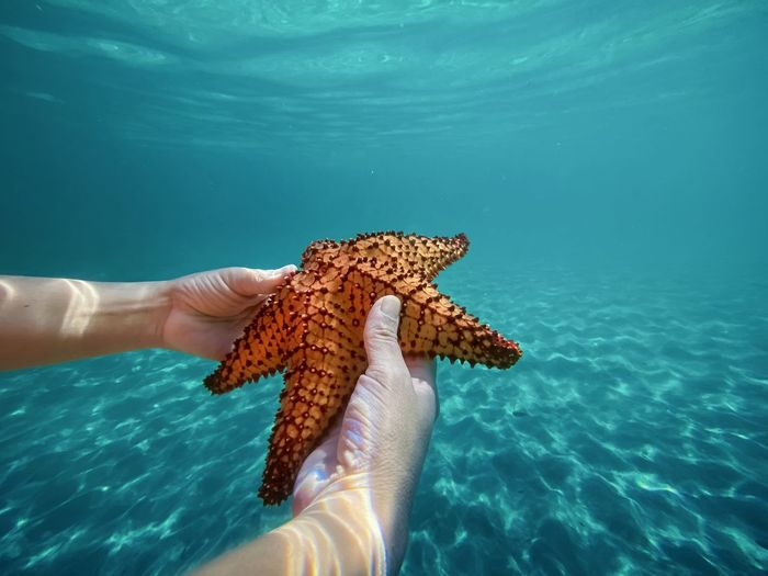 Midsection of person holding starfish underwear