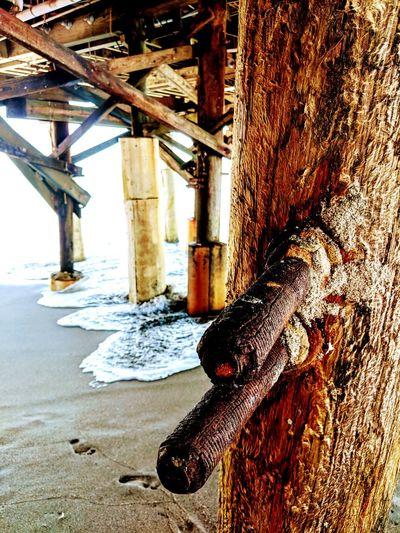 Beach Dog Water