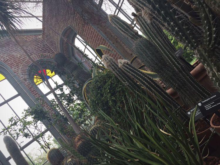 St. Louis MO MO Botanical Gardens On The Move