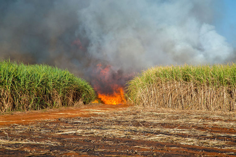 Fired Accidents And Disasters Air Pollution Burning Day Environment Field Fire Fire - Natural Phenomenon Flame Grass Heat - Temperature Land Landscape Nature No People Outdoors Plant Pollution Power In Nature Sign Sky Smoke - Physical Structure Sugar Cane Field Warning Sign