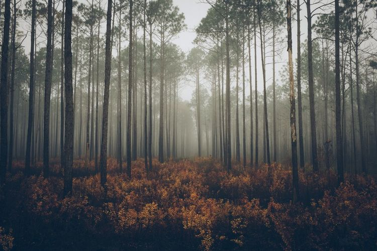 Whispers in the woods. South Huffington Post Stories Melancholic Landscapes VSCO