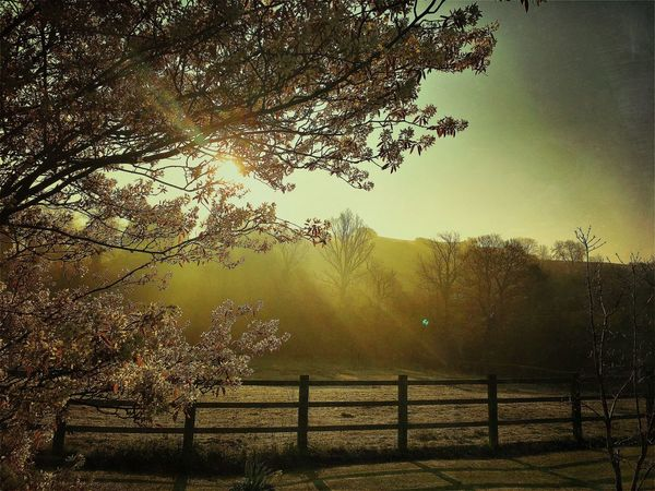 Tree Nature Tranquility Beauty In Nature Scenics Tranquil Scene Sunlight No People Spring Sun Outdoors Sky Day Landscape Sunrise Sunrise_Collection Morning Morning Light Morning Sky Beautiful Nature Beautiful View