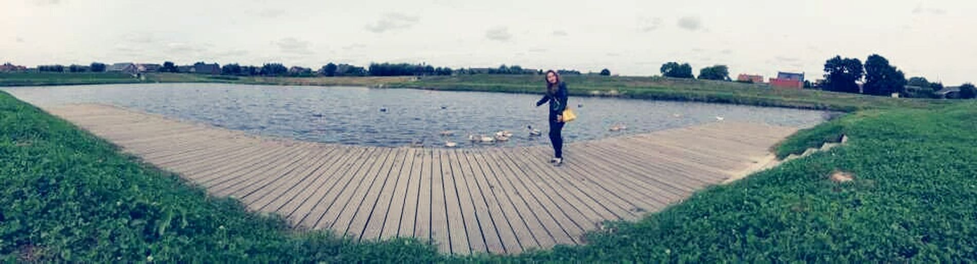 hello ducks Pittem Belgium